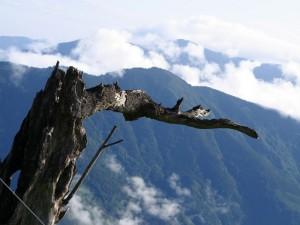 山裡的樹木